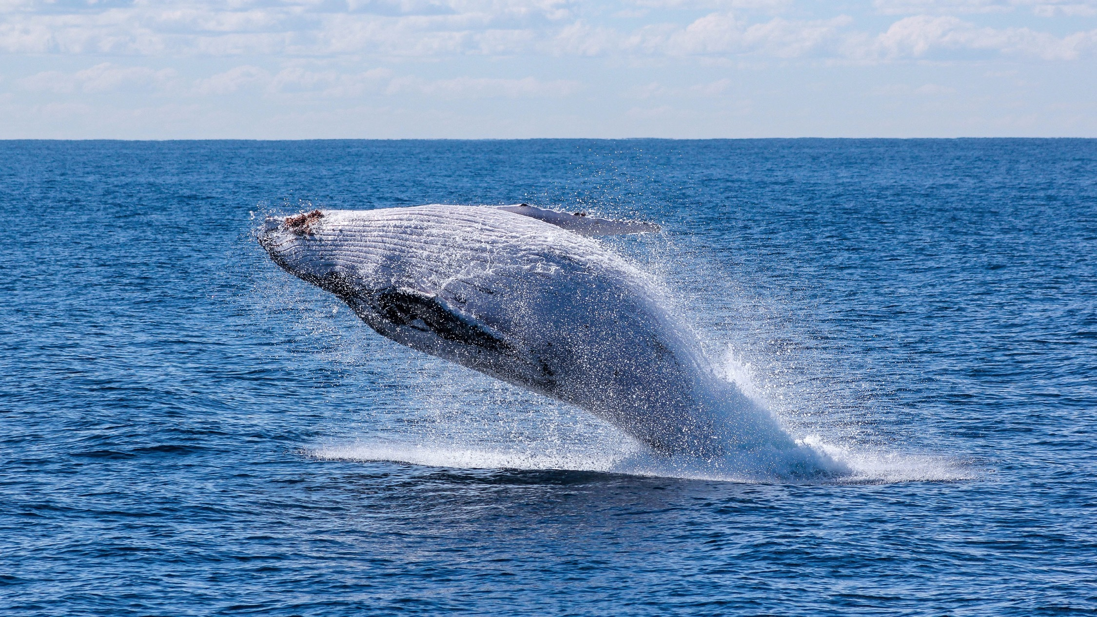 Where to go whale watching near Melbourne