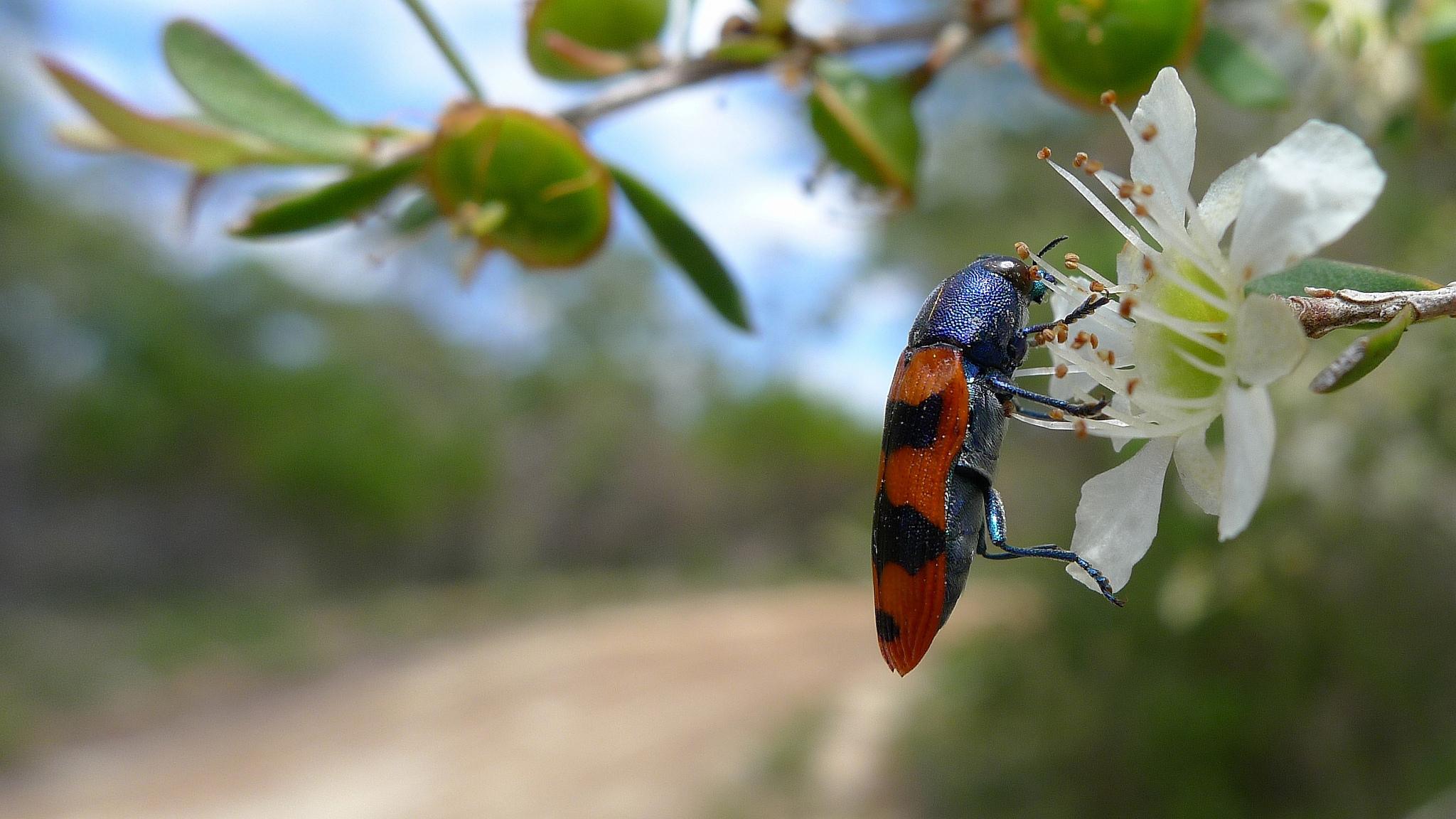 Dharawal National Park