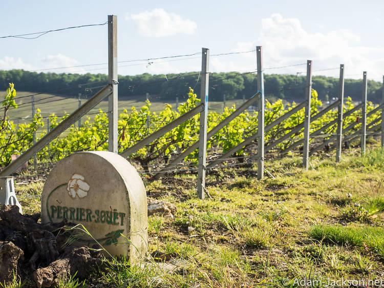 Escape to the Champagne region