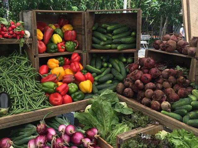 Harvard University Farmers Market