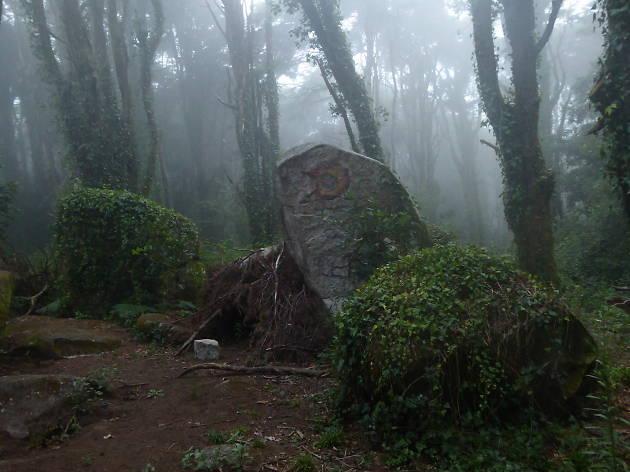 bosque dos druidas