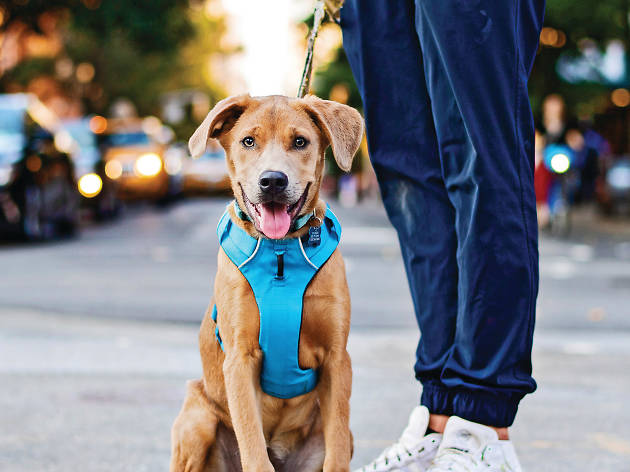 NYC pet Instagram accounts you need to follow