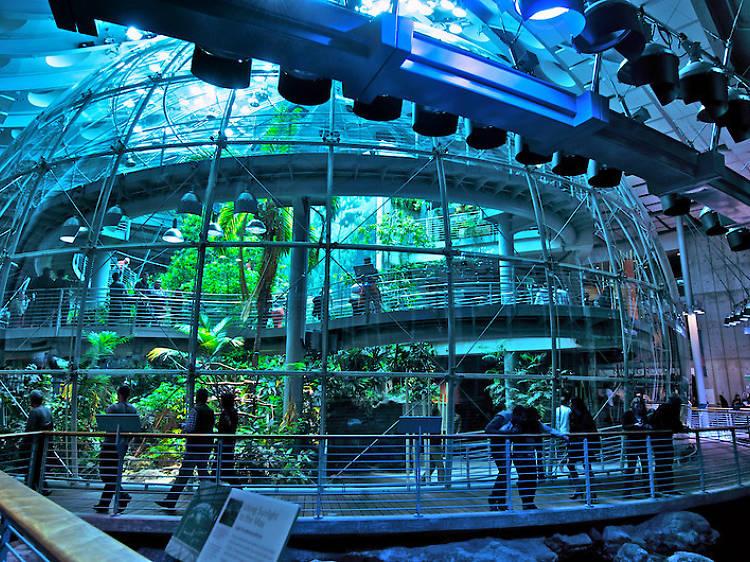 Walk through a living rainforest
