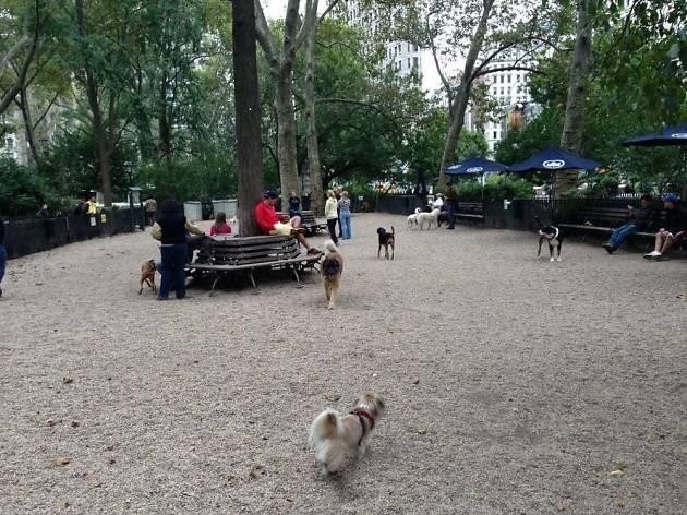 Madison Square Park Dog Run