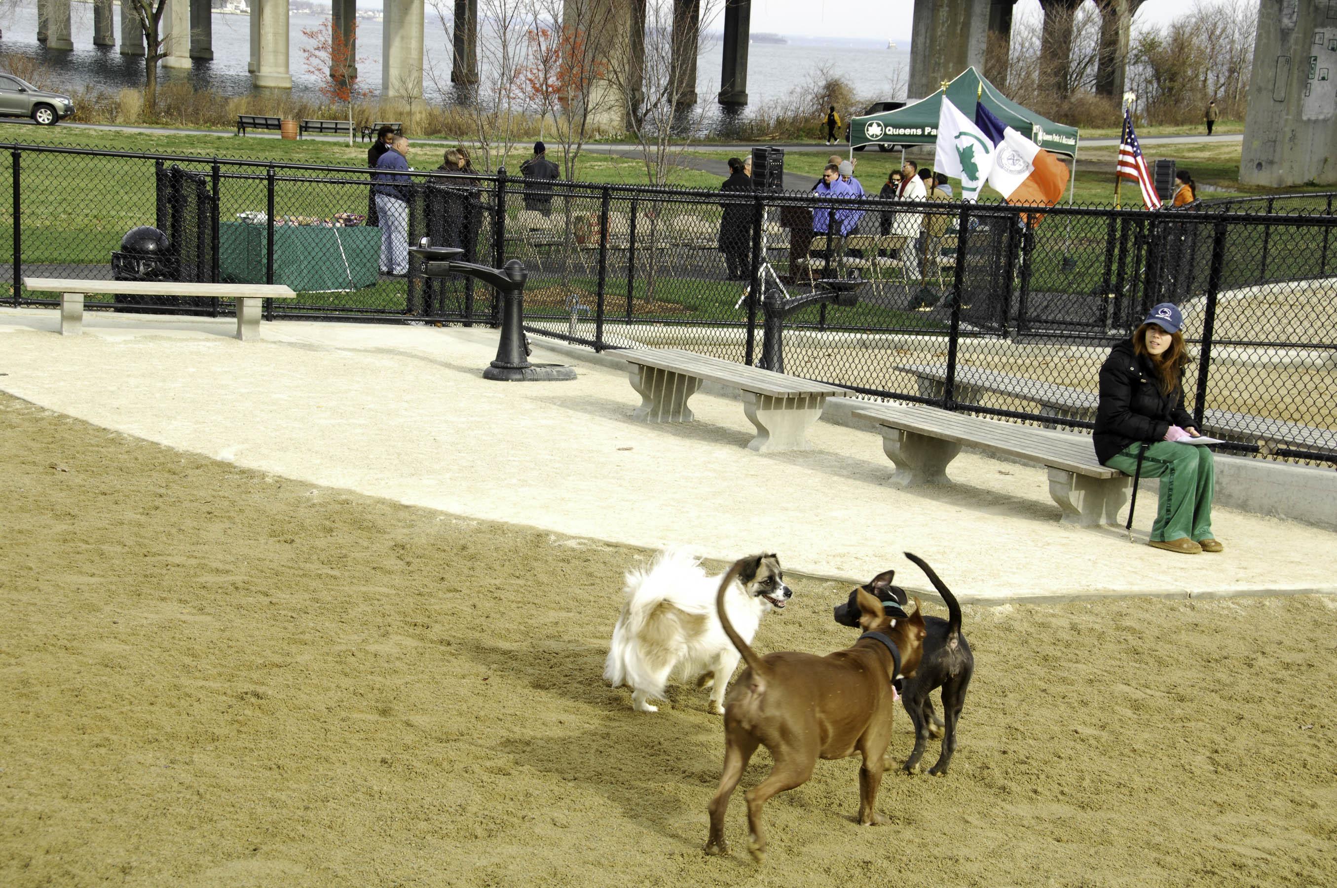 Little Bay Dog Park