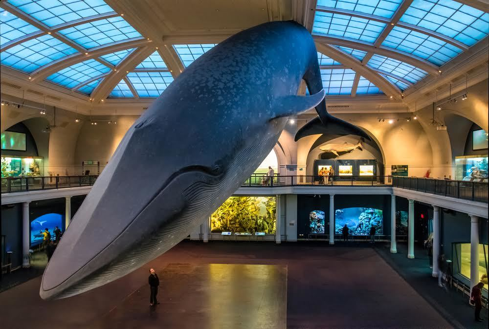 American Museum of Natural History to host an epic sleepover...for adults