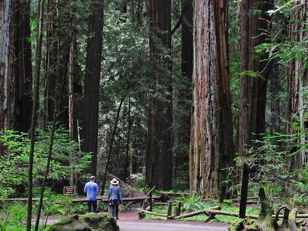 Redwood State Natural Reserve