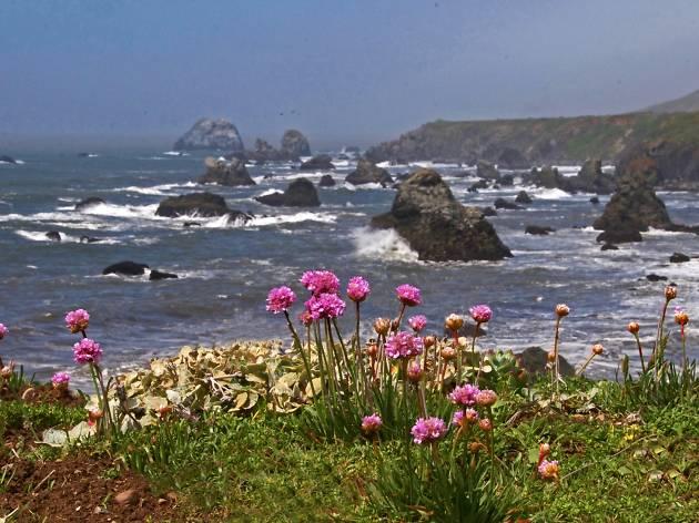 Coast; Flower; Flowering; Wildflower