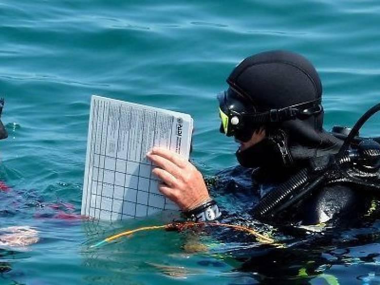 Submarinistas de ciudad