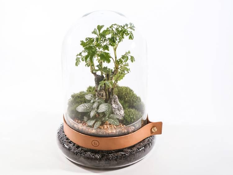 Bonart:玻璃生態盆景中的秘密花園