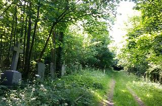 Camberwell Old Cemetery Southwark Woods