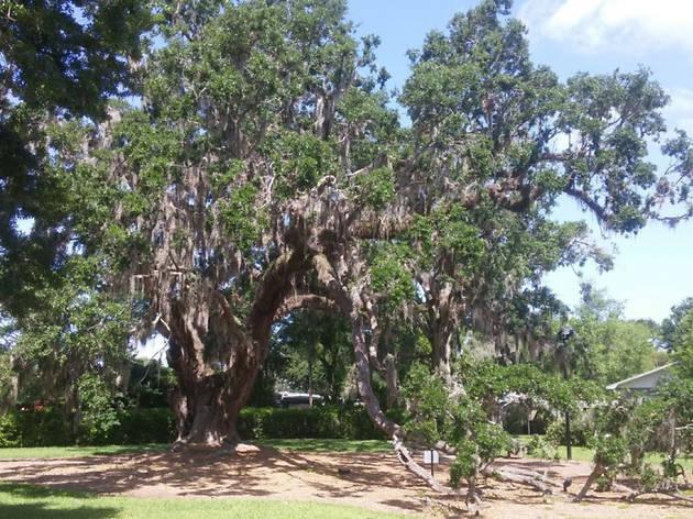 Big Tree Park