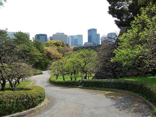 Imperial Gardens Chidoya