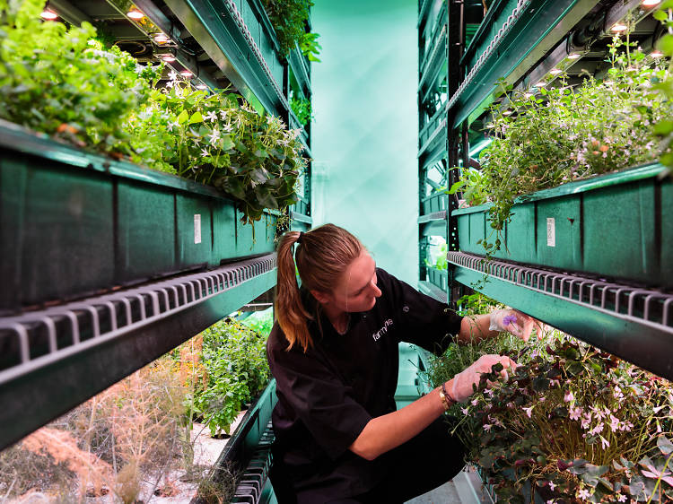 """An underground hydroponic farm in the Financial District is taking the """"eat local"""" mantra to a whole new level."""