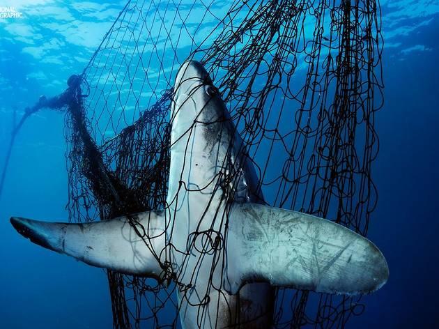 exposicao sharks, oceanario, national geographic