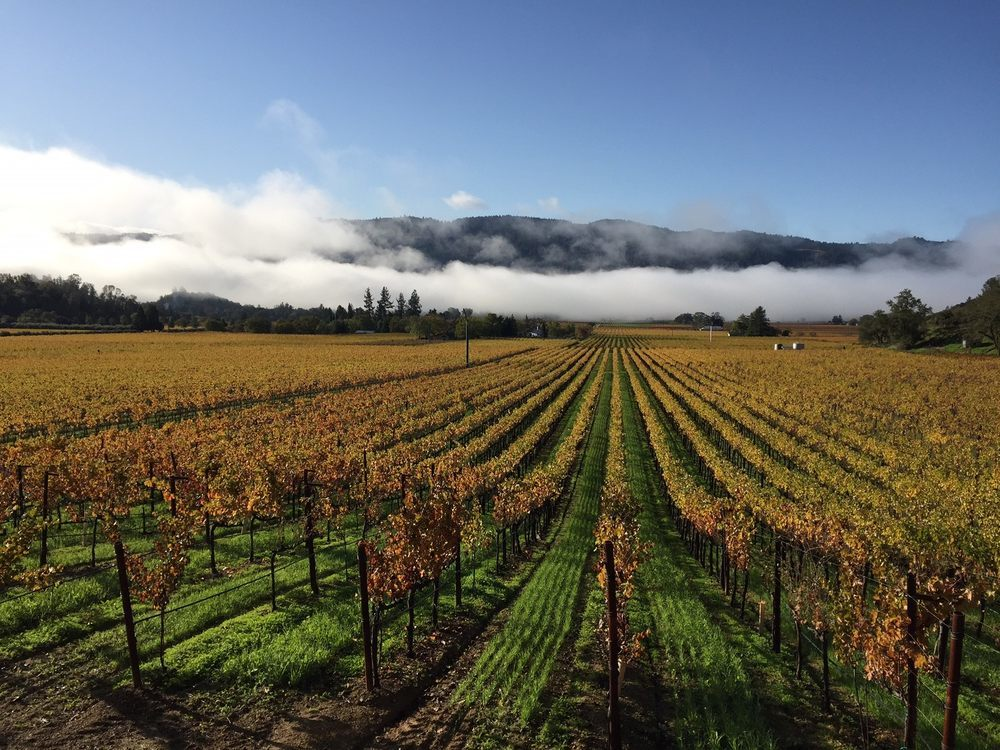 Celebrate harvest at these Napa and Sonoma events