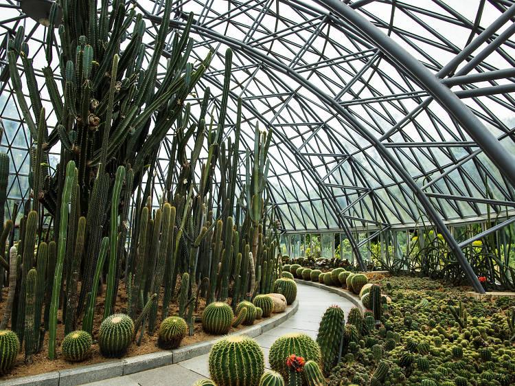 Fairy Lake Botanical Garden