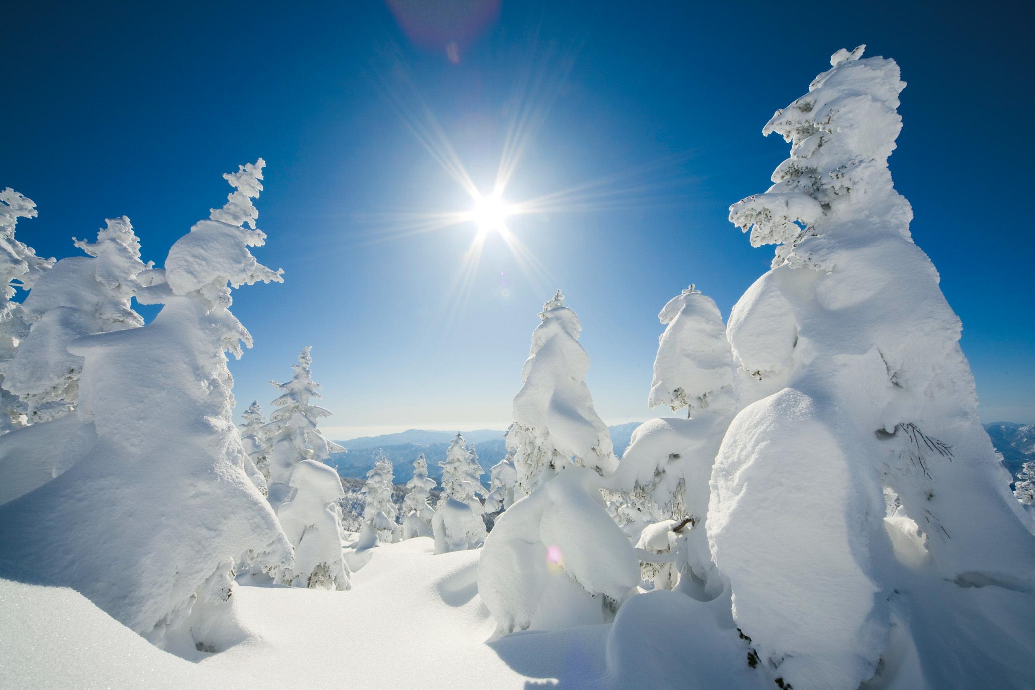 akita snow monster