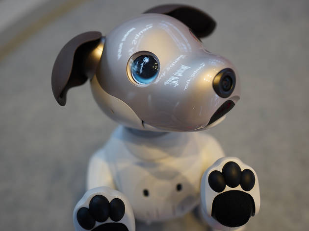 Robot puppy with paws against the camera lens
