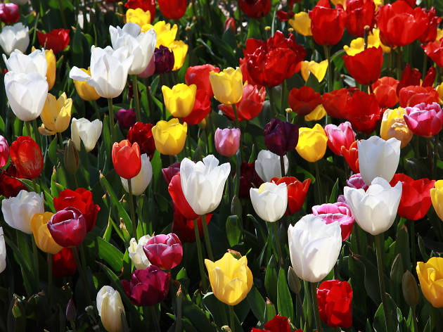 Colourful flowers.
