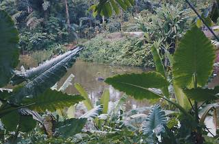 The Learning Forest Botanic Gardens
