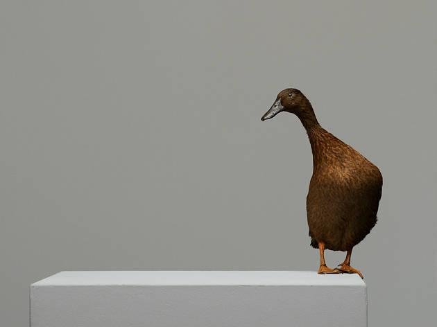 The Wild Duck, Almeida, Robert Icke