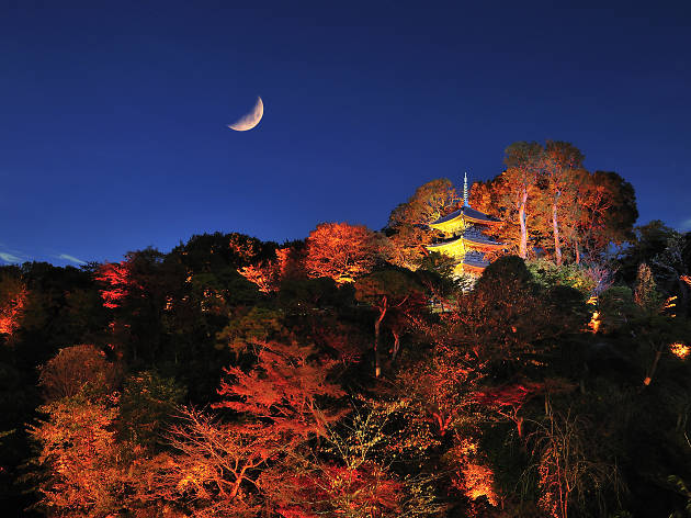 Hotel Chinzanso Autumn Garden Lightup