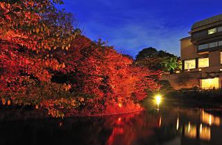 ホテル椿山荘東京 庭園の紅葉&ライトアップ