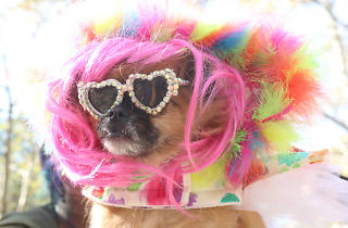 Great Pupkin Dog Costume Contest