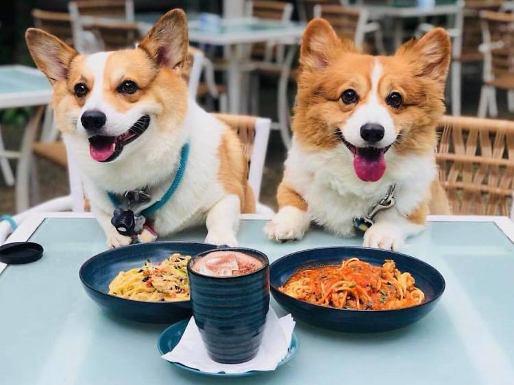 The best pet-friendly cafes in Singapore