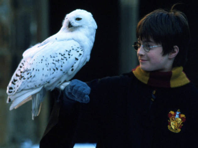 DO NOT REUSE. Harry Potter and Hedwig. Warner Bros Studio Tour campaign.