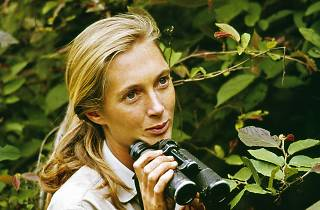 Documental Jane Goodall