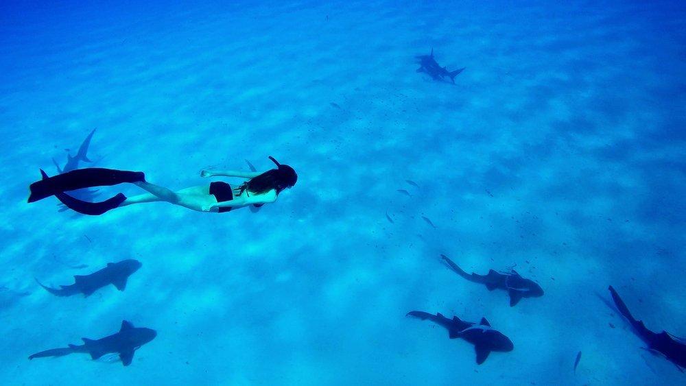 Claqueta i acció! Cicle de cinema ambiental: Sea of life