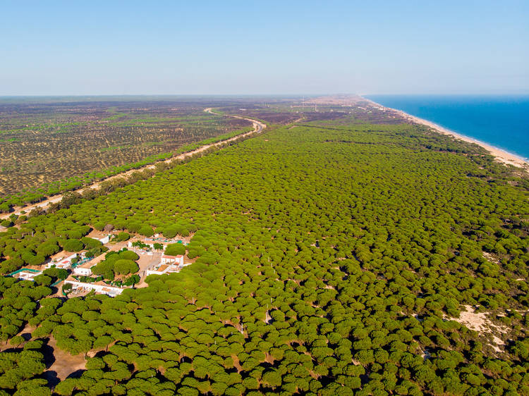 Go on safari in the Doñana dunes in Huelva