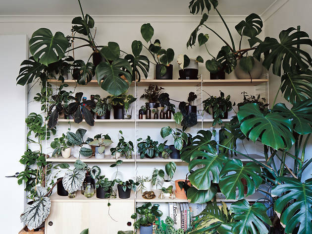 Mercedes me X Design: The Plant Society