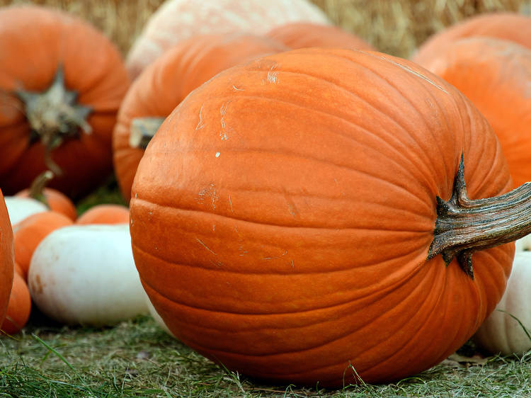 Get in on the seasonal fun at these Miami pumpkin patches
