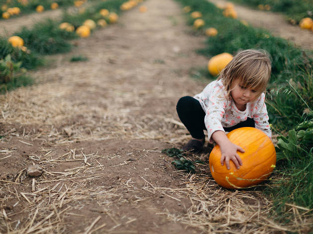 Kid with a pumpkin