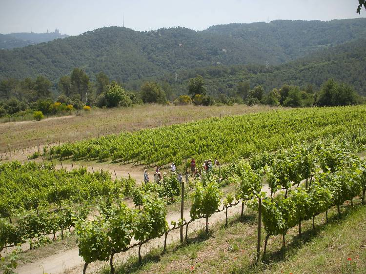 Visitar Can Calopa, la bodega de los vinos de Barcelona