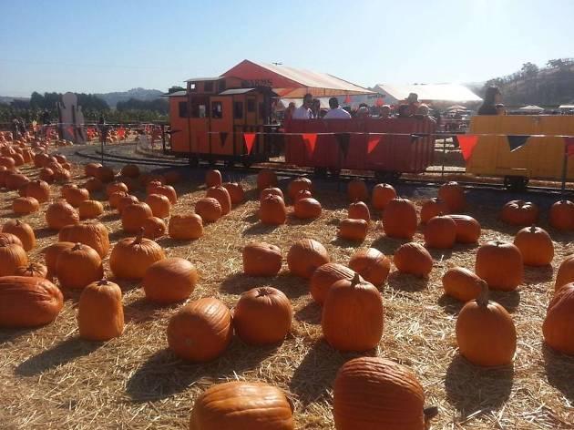 Spina Farms Pumpkin Patch