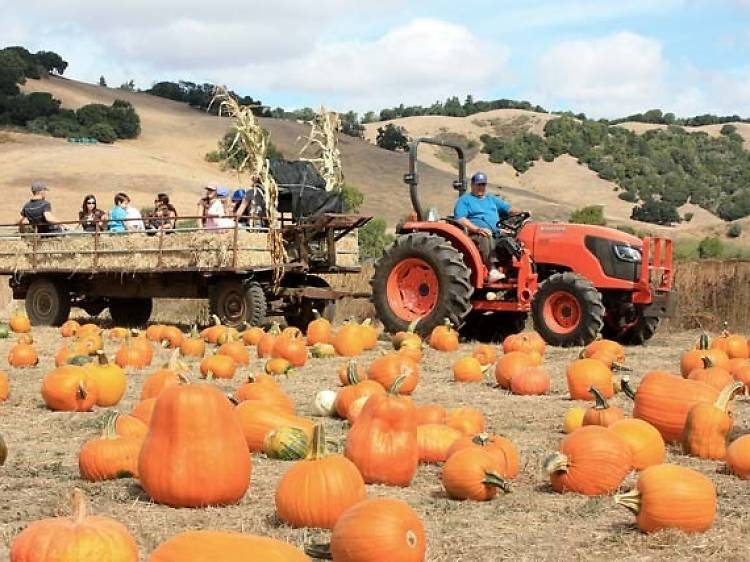 Nicasio Valley Farms