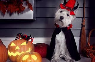 Halloween especial para tu perro