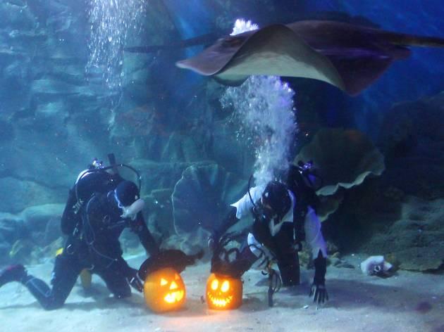 Sea Life Nights – Halloween edition