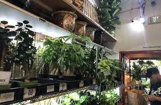 Rainbow plant store shop in Chinatown