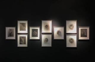 Nature Morte: Platinum Prints