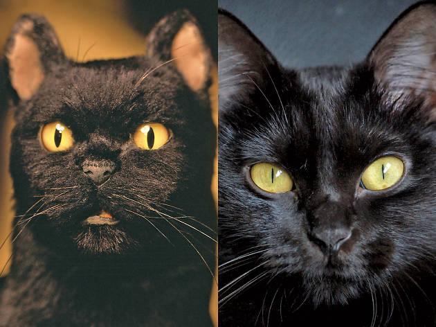 Salem, personaje de las series de Sabrina