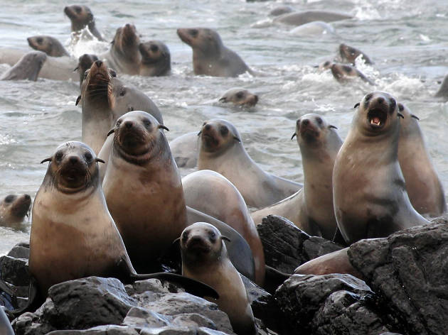 Sea lions at Phillip Island Nature Park