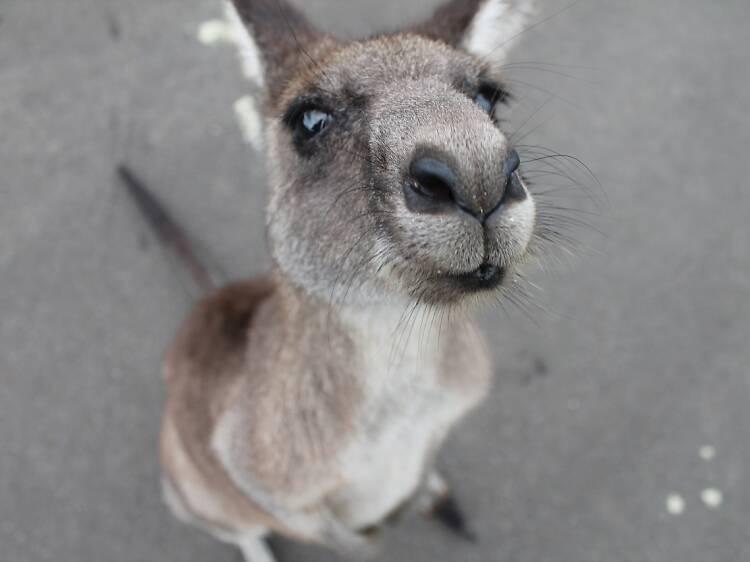 Cute animal encounters in Melbourne
