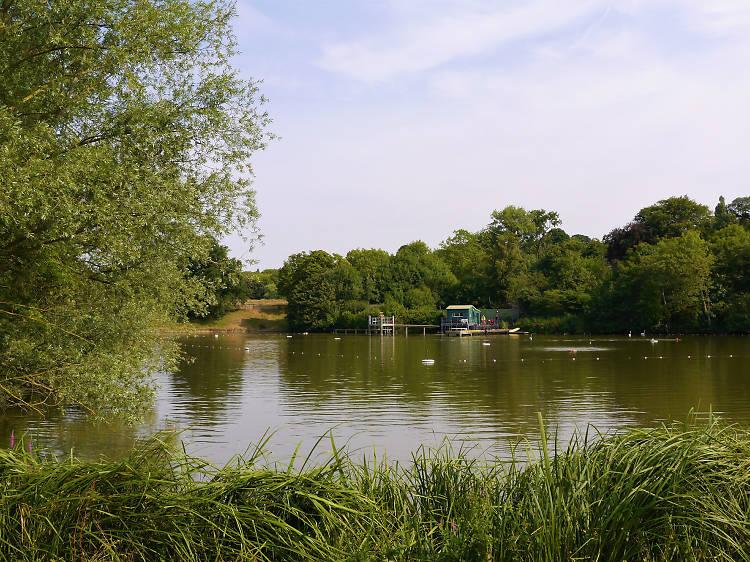 Swim in Hampstead Heath Ponds
