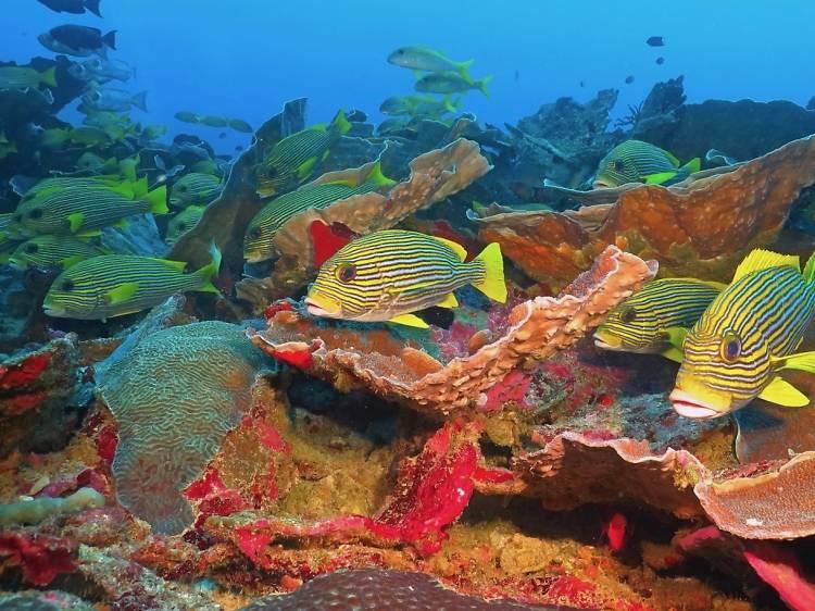 Tubbataha Reef National Marine Park, Philippines