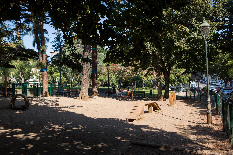dog park, campo mártires da pátria, cão, cães, parque